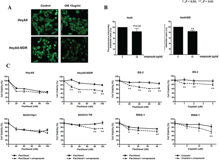 Measurement of pH after omeprazole treatment and effects of omeprazole on cell survival with cytotoxic drugs in epithelial ovarian cancer cell lines.