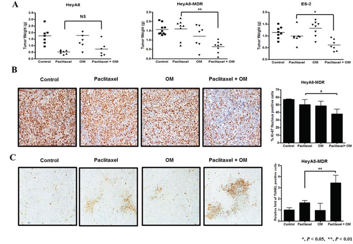 The effect of omeprazole as a chemosensitizer in chemoresistant cells assessed in female BALB/c nude mice.