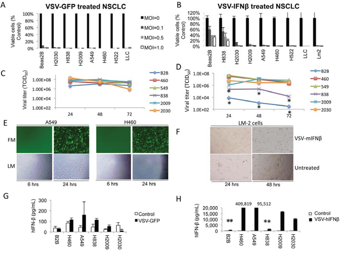 VSV-GFP and VSV-hIFNβ are cytotoxic to NSCLC cells.
