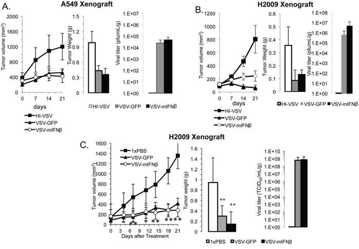 VSV has antitumor efficacy in human xenografts.