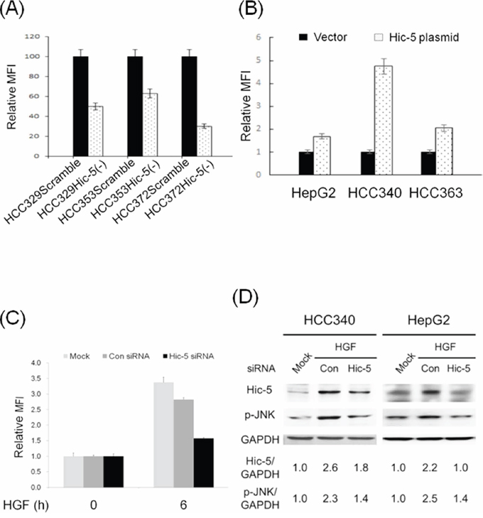 Hic-5 is required for constitutive and HGF-induced ROS generation and JNK phosphorylation, and sufficient for ROS generation and JNK phosphorylation.