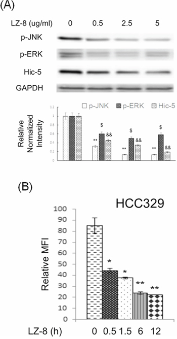 LZ-8 suppressed constitutive expression of Hic-5, JNK activation and ROS generation in HCC329.