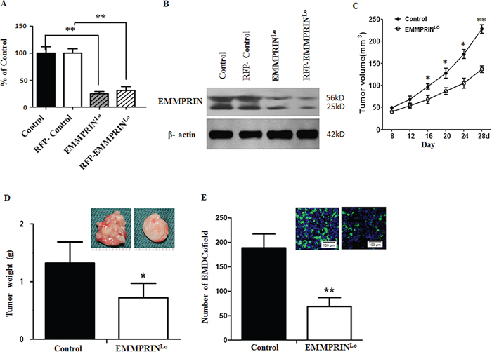 Down-regulation of EMMPRIN reduces tumor growth and BMDC recruitment.