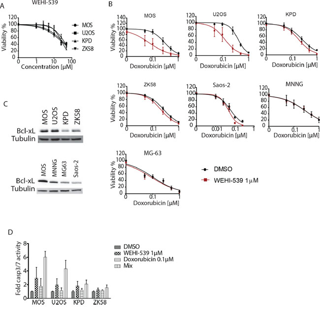 Inhibition of Bcl-xL with WEHI-539 sensitizes osteosarcoma to doxorubicin.
