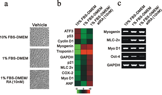 The mRNA expression profile was analyzed in differentiated H9c2 cells.