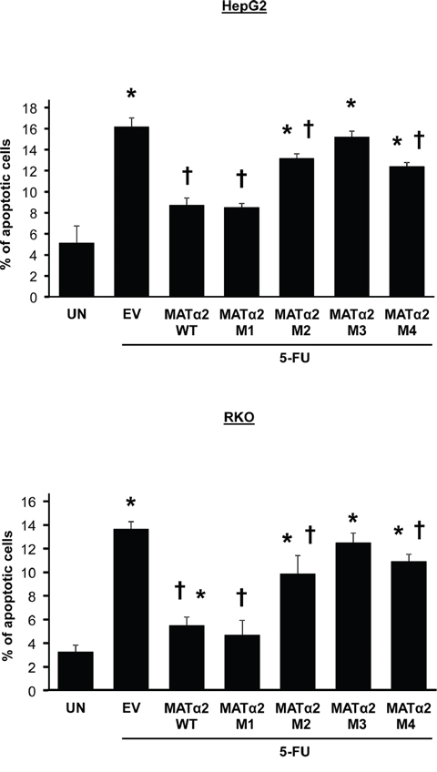 Overexpression of wild type but not sumoylation mutants that result in less-stable MATα2 protect against 5-FU-induced apoptosis.