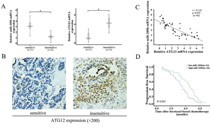 Downregulation of miR-200b expression correlates with upregulation of ATG12 expression, decreased sensitivity to docetaxel and poor prognosis in lung adenocarcinoma tissues.