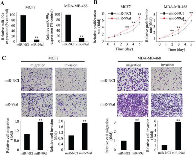 Inhibition of endogenous miR-99a promoted aggressive behaviors of breast cancer cells.