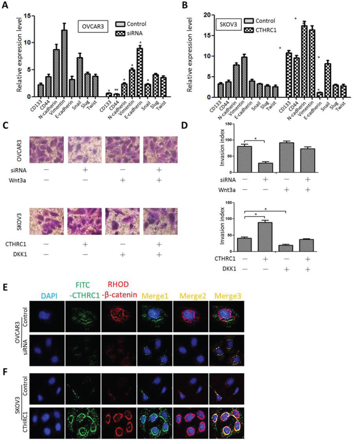 Effect of CTHRC1 on stem/EMT-related gene expression and Wnt/β-catenin signaling.
