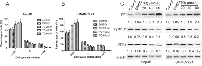 TQ induces G1 phase cell cycle arrest; p21, cylinD1 and CDK2 protein expression in Hep3B and SMMC7721 cells.