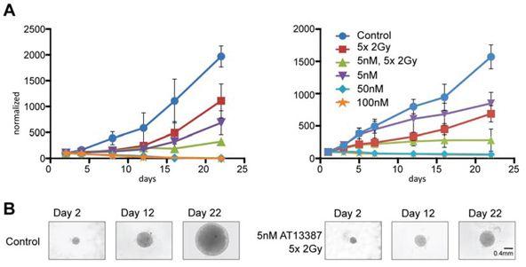 Multicellular tumor spheroid growth.
