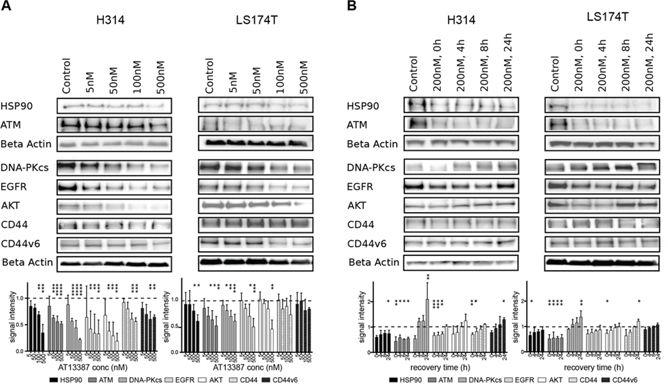 Effect of AT13387 treatment on HSP90 client protein levels (HSP90, ATM, DNA-PKcs, EGFR, AKT, CD44, CD44v6).