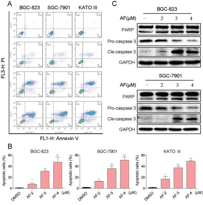 AF induces apoptosis in human gastric cancer cells.