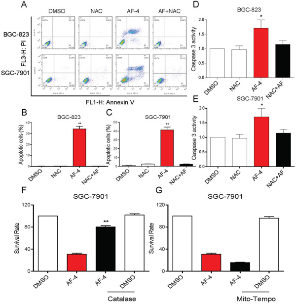 AF induces cytotoxicity in human gastric cancer cells is dependent on intracellular ROS generation.