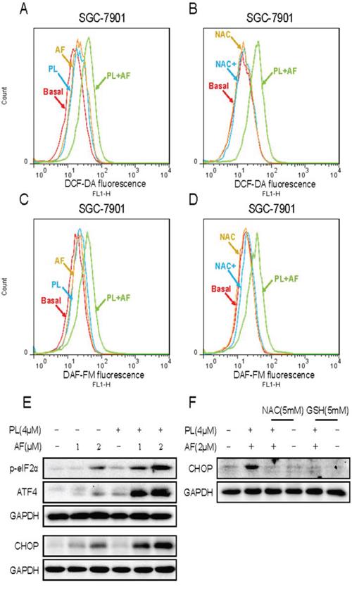 PL enhances AF-induced intracellular ROS accumulation and ER stress response.