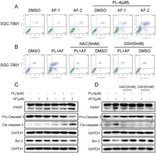 PL enhances AF-induced apoptosis in SGC-7901 cells.