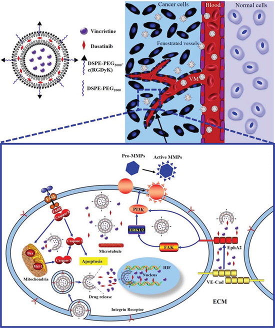 Schematic design and mechanism of functional vincristine plus dasatinib liposomes for the treatment of TNBC and VM channel elimination.