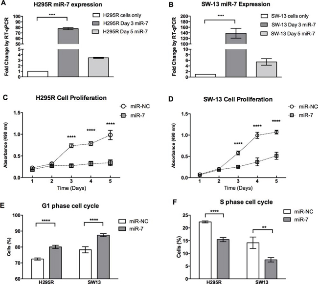 miR-7 inhibits cell proliferation and induces cell cycle arrest.