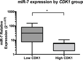 In ACC patient samples, miR-7 expression is inversely associated with CDK1 expression.