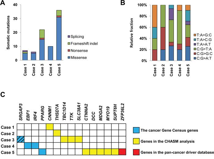 Somatic mutations of five endometrial stromal sarcomas.