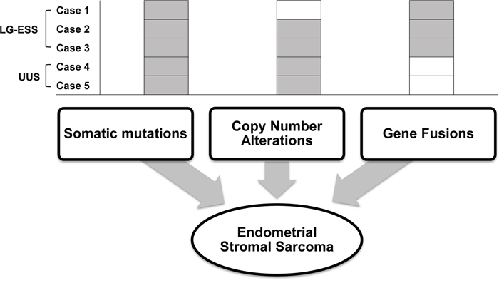 Schematic representation of suggested genetic alterations in endometrial stromal sarcoma.