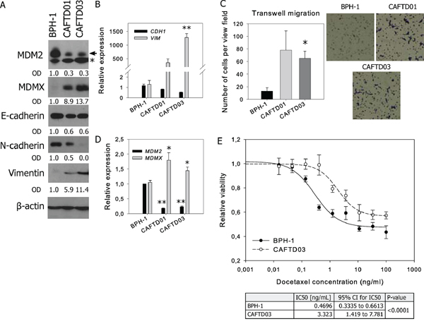 Tumorigenic prostate cell lines with mesenchymal characteristics and increased resistance to docetaxel are characterized by downregulation of MDM2 and upregulation of MDMX.