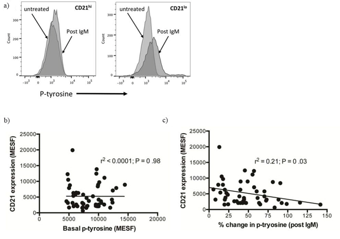 Analysis of the change in phosphotyrosine following B-cell receptor crosslinking with anti-IgM.