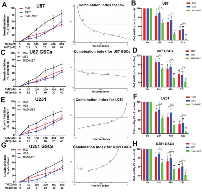 MET augments the effects of TMZ in glioma cell and GSC proliferation.
