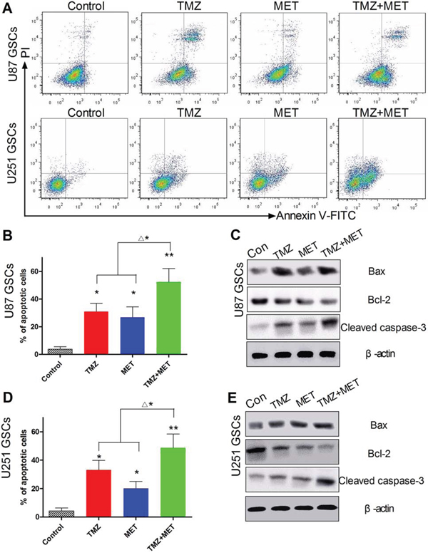 Effect of TMZ and MET on GSCs apoptosis.