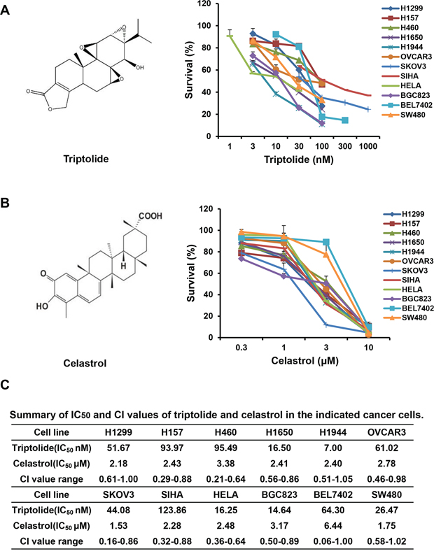 Alone or co-treatment with triptolide and celastrol inhibit the growth of cancer cells in vitro.