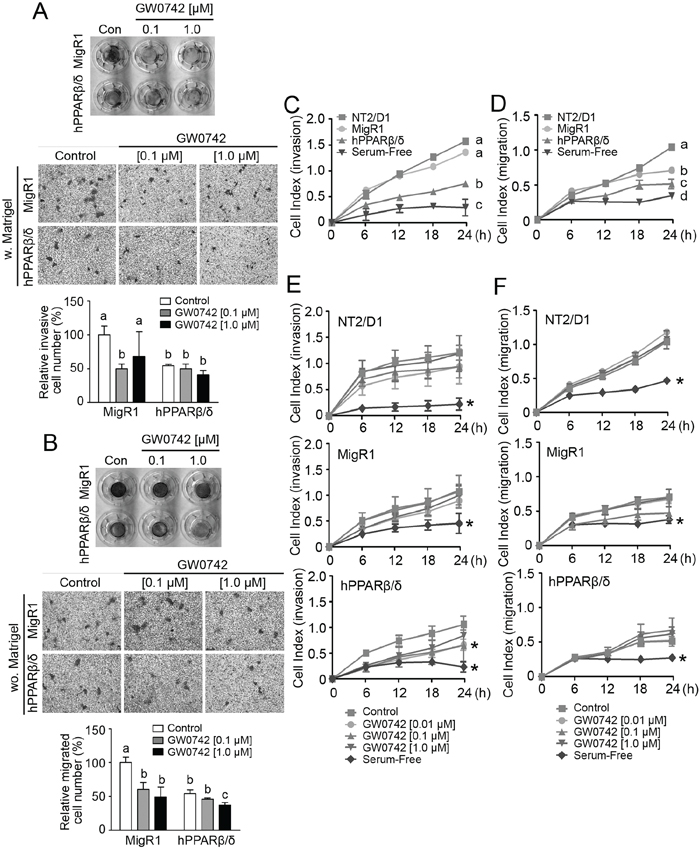 PPARβ/δ inhibits invasion and migration of NT2/D1 cells.