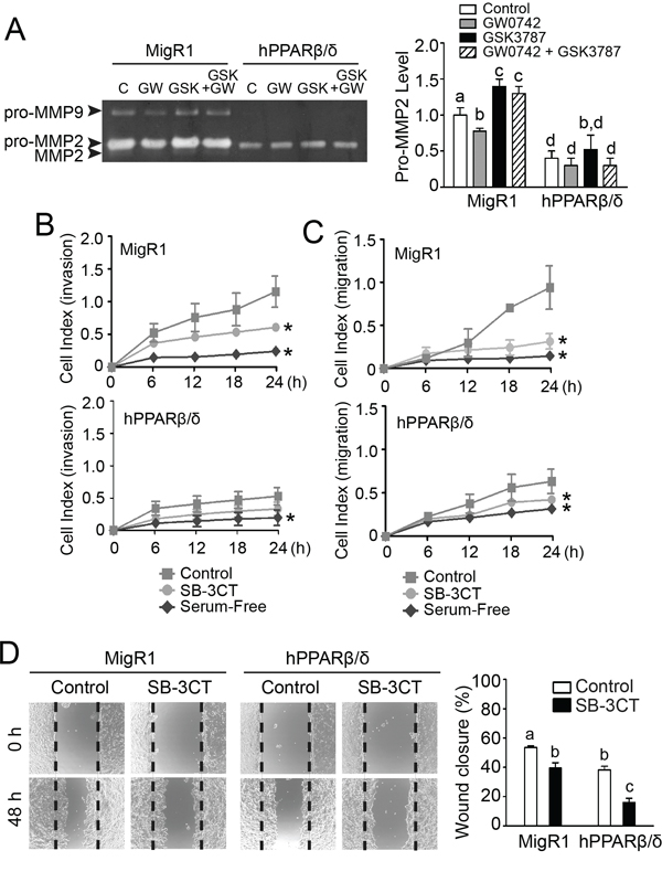 PPARβ/δ-dependent attenuation of MMP2-mediated invasion and migration of NT2/D1 cells.