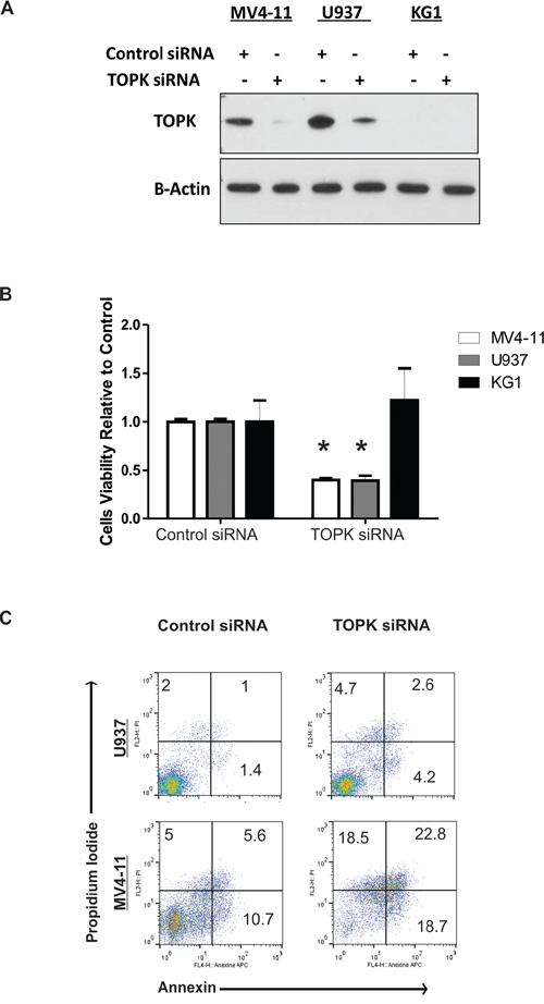 TOPK Knock-down decreases cell viability and induces apoptosis.
