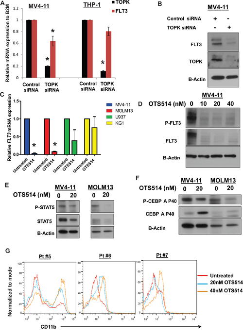 Targeting TOPK downregulates FLT3 expression, decreases CEBPA phosphorylation and induces myeloid differentiation in AML cells.
