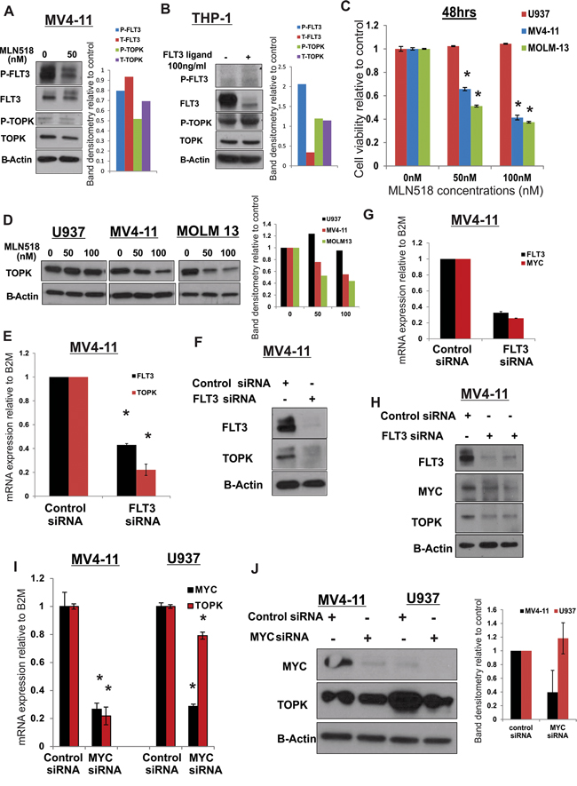TOPK is activated in FLT3-ITD positive in AML cells.