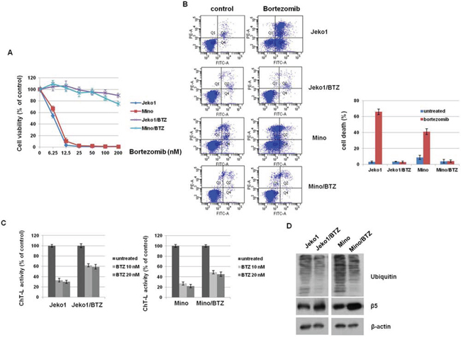 PSMB5 mutation is not associated with bortezomib (BTZ)-resistant MCL cells.