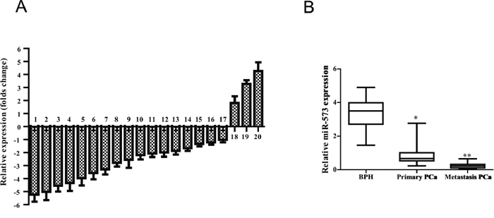 miR-573 level is decreased in human prostate cancer tissues.