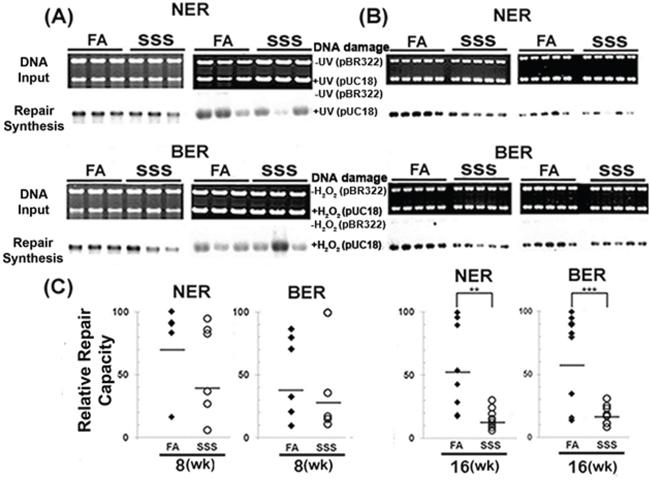 Side-stream smoke inhibits DNA repair.