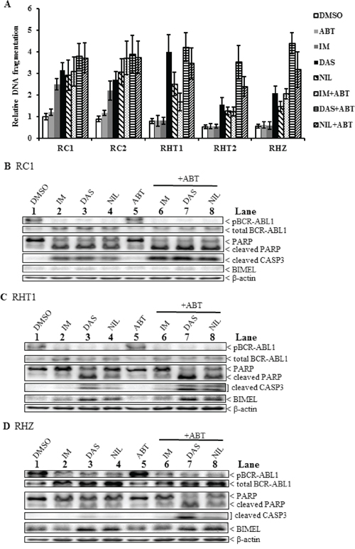 A combination of a second-generation TKI and the BH3 mimetic ABT-737 induced maximal apoptosis in imatinib-resistant BIM deletion polymorphism-containing clones.