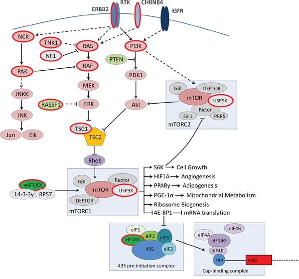 Molecular drivers of low grade serous ovarian tumours.