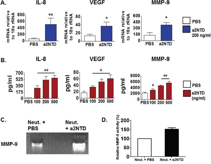 a2NTD promotes neutrophils to secret protumorigenic mediators.