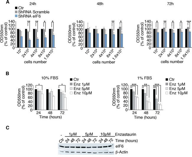 Partial depletion of eIF6 and Enzastaurin treatment affect growth of REN cells.