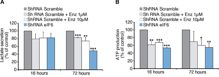 Anti-Warburg effect: eIF6 depletion causes less Glycolysis and ATP content in REN cells.