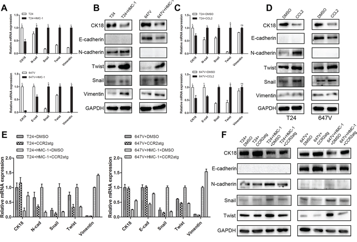 CCL2 could induce EMT signal pathways in BCa cells.