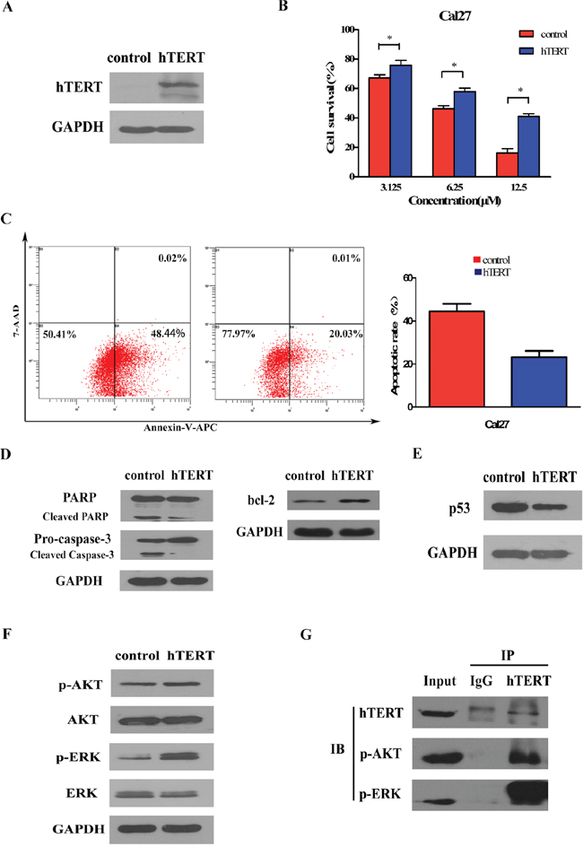 Ectopic expression of hTERT suppresses drug sensitivity by activating AKT and ERK signaling pathways in cancer cells.
