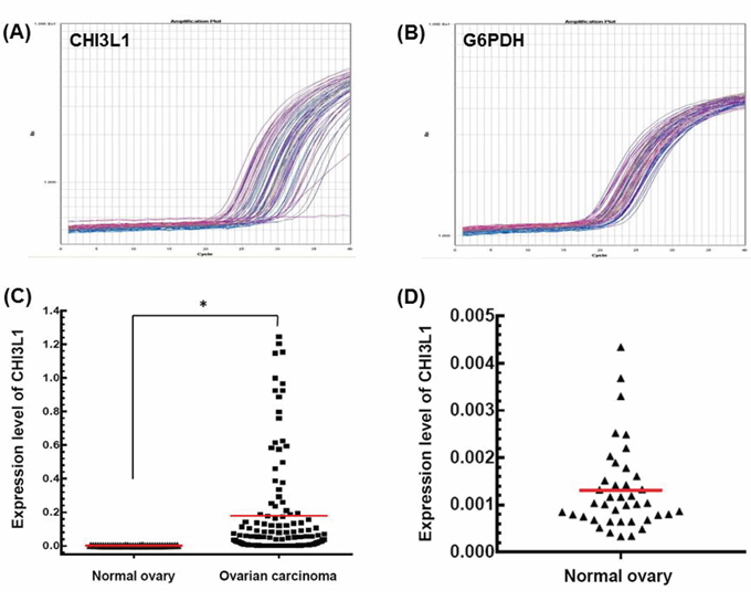 mRNA expression detected by quantitative real-time PCR.