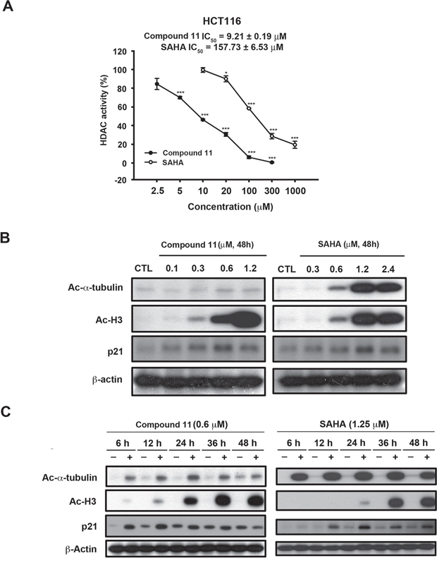 Effects of compound 11 on HDAC activity in HCT116 cells.