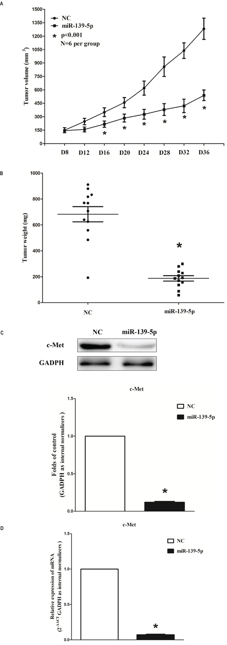 Ectopic expression of miR-139-5p suppresses tumor growth in vivo.