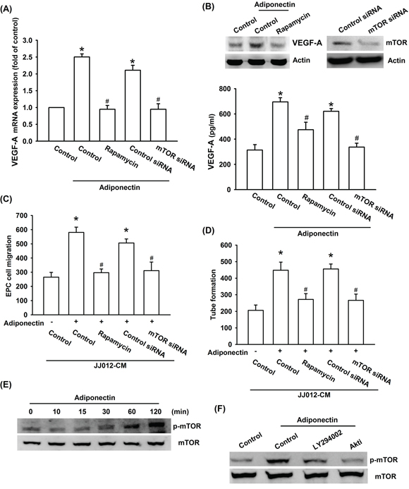 PI3K/Akt-dependent mTOR signaling pathway is activated in response to adiponectin treatment of human chondrosarcoma cells.