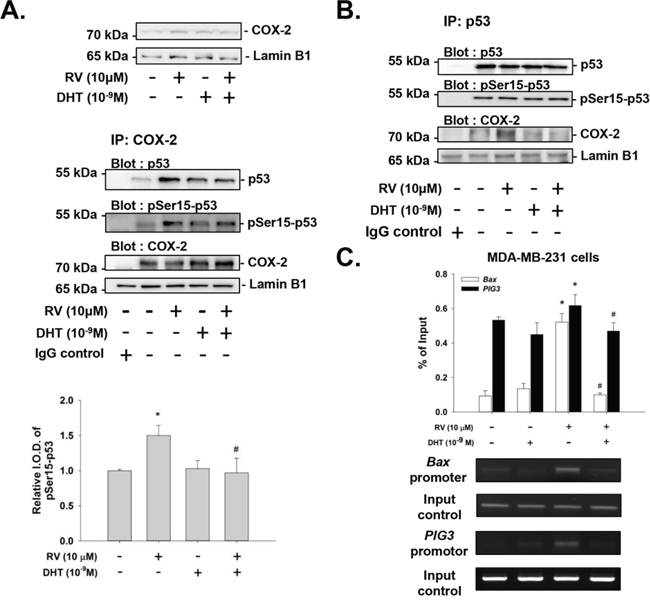 Effects of DHT on resveratrol-induced complexing of COX-2 with pSer-15-p53 and DNA binding in MDA-MB-231 cells.